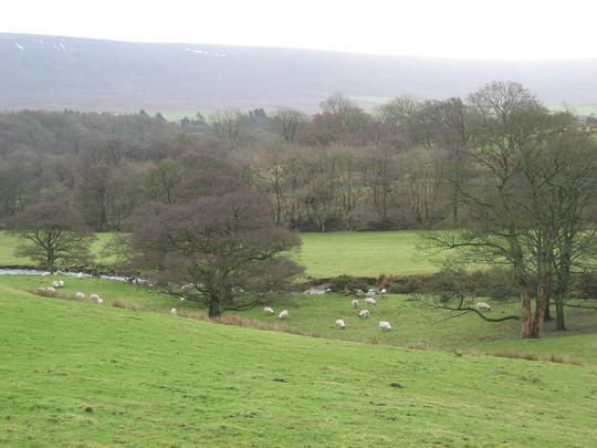 Sheep and Stream