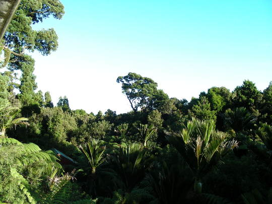 Te Nikau, Punakaiki, New Zealand