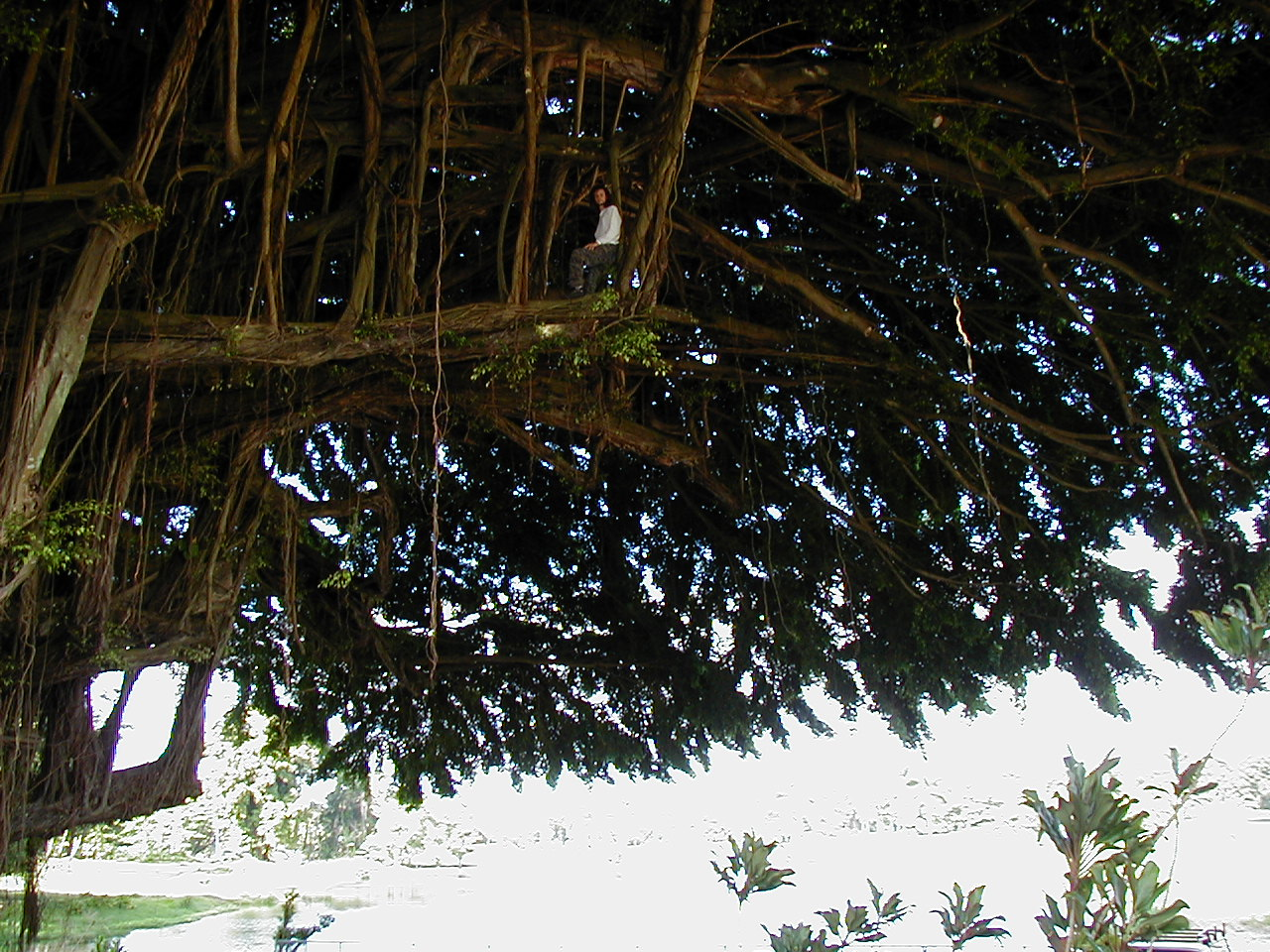 Kona Day One -- the Island Without Hope